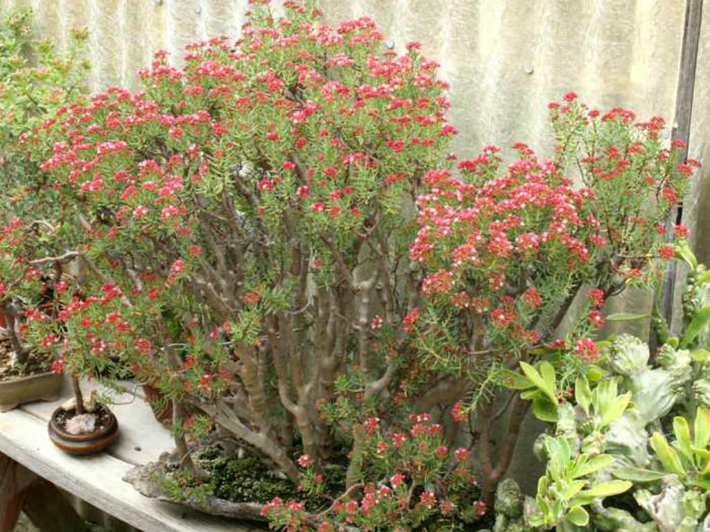 NEW 627 SUCCULENT PLANTS IDENTIFICATION | succulent plants