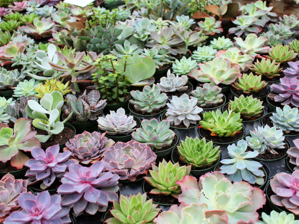 What You Need To Know About Succulent Dormancy World Of Succulents