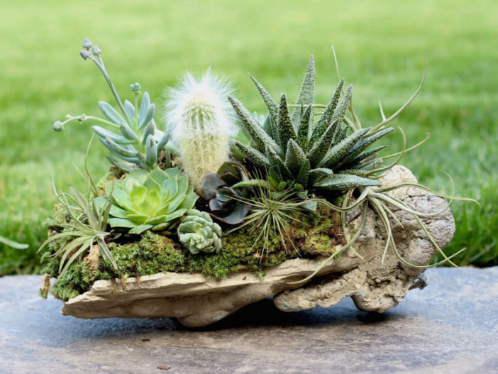 Succulents and Air Plants